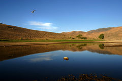 το πουλί πετά τη λίμνη πέρα από το topaz στοκ φωτογραφία με δικαίωμα ελεύθερης χρήσης