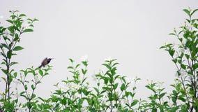 Το πουλί που πετά σε σε αργή κίνηση απόθεμα βίντεο