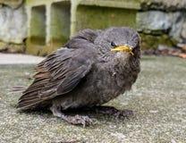 Το πουλί στήριξης εξετάζει άμεσα τη κάμερα στοκ φωτογραφία με δικαίωμα ελεύθερης χρήσης