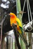 Το πουλί του φωτεινού χρώματος τοποθέτησε αιχμή στο κεφάλι του Στοκ Εικόνες