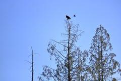 Το πουλί υπερασπίζει το έδαφος στοκ φωτογραφία