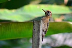 Το πουλί φύσης ομορφιάς Στοκ φωτογραφία με δικαίωμα ελεύθερης χρήσης