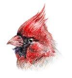 το πουλί χρωμάτισε απομο ελεύθερη απεικόνιση δικαιώματος