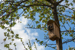 Το πουλί έφερε κάποια τρόφιμα Στοκ φωτογραφίες με δικαίωμα ελεύθερης χρήσης