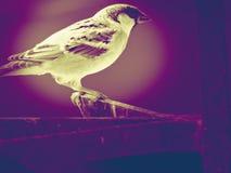 Το πουλί είναι πραγματική ομορφιά Στοκ Εικόνα