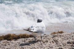 Το πουλί εξετάζει το κύμα Στοκ Φωτογραφίες