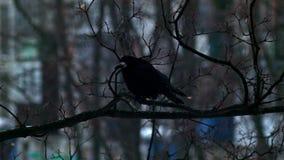 Το πουλί κάθεται σε ένα γυμνό δέντρο κλάδων, χειμώνας, κρύος καιρός απόθεμα βίντεο