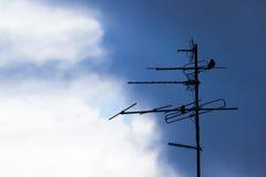 Το πουλί κάθεται σε ένα antenne Στοκ Εικόνες