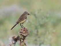 Το πουλί με το θήραμα Στοκ φωτογραφία με δικαίωμα ελεύθερης χρήσης