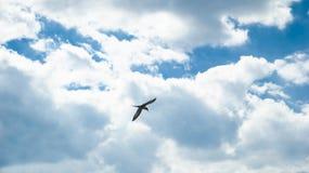 Το πουλί πετά στον ουρανό. Στοκ φωτογραφία με δικαίωμα ελεύθερης χρήσης