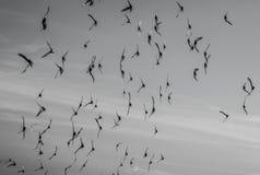 Το πουλί πηγαίνει στο σπίτι το βράδυ Στοκ φωτογραφία με δικαίωμα ελεύθερης χρήσης
