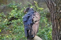 το πουλί προσεύχεται Στοκ Φωτογραφία