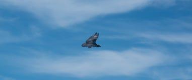 το πουλί προσεύχεται Στοκ Φωτογραφίες