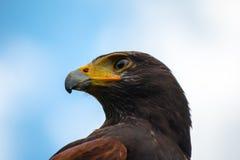 το πουλί προσεύχεται Στοκ φωτογραφίες με δικαίωμα ελεύθερης χρήσης