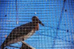 Το πουλί στο κλουβί Στοκ Εικόνες
