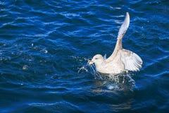Το πουλί τρώει το ψωμί Στοκ Φωτογραφίες
