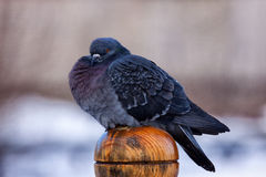 το πουλί στοκ φωτογραφία με δικαίωμα ελεύθερης χρήσης