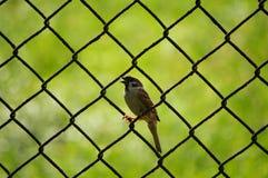 το πουλί Στοκ Φωτογραφία