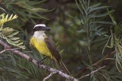 το πουλί Στοκ Φωτογραφίες