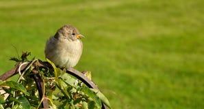 το πουλί Στοκ εικόνα με δικαίωμα ελεύθερης χρήσης