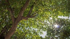 Το πολύ πράσινο βγάζει φύλλα Στοκ φωτογραφία με δικαίωμα ελεύθερης χρήσης