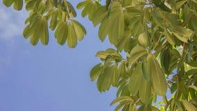 Το πολύ πράσινο βγάζει φύλλα Στοκ εικόνες με δικαίωμα ελεύθερης χρήσης