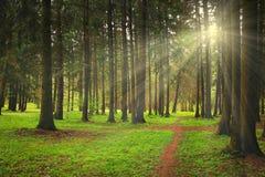 Το πράσινο δάσος μια φωτεινή ηλιόλουστη ημέρα λάμπει ακτίνες του ήλιου Στοκ φωτογραφία με δικαίωμα ελεύθερης χρήσης