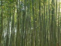 Το πράσινο δάσος μπαμπού στη Νότια Κορέα, υπόβαθρο Στοκ Φωτογραφία