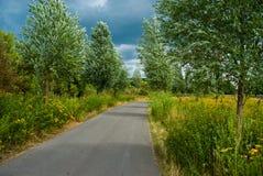 Το πράσινο δέντρο αγροτικών παρόδων βγάζει φύλλα τις ιτιές θερινής θύελλας Στοκ Φωτογραφία