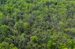 Το πράσινο αποβαλλόμενο δάσος στην αρχή της άνοιξη Στοκ Φωτογραφίες