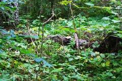 Το πράσινο δασικό σύνολο βγάζει φύλλα Στοκ Εικόνα