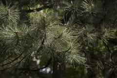 Το πράσινο δέντρο με πράσινο βγάζει φύλλα Στοκ Φωτογραφίες