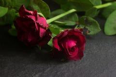 το πράσινο κόκκινο φύλλων αυξήθηκε Στοκ φωτογραφία με δικαίωμα ελεύθερης χρήσης