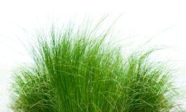 Το πράσινο μπάλωμα χλόης απομόνωσε το λευκό Στοκ Φωτογραφία
