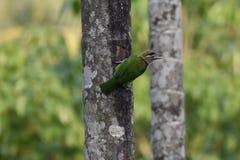 Το πράσινο πουλί άγνωστο σε με στοκ εικόνες