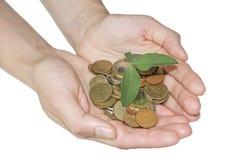 Το πράσινο φυτό αυξάνεται από τα νομίσματα στα χέρια πραγματική αντανάκλαση χρημάτων σπιτιών κτημάτων έννοιας Στοκ εικόνα με δικαίωμα ελεύθερης χρήσης