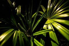 Το πράσινο φυτό βγάζει φύλλα Στοκ φωτογραφία με δικαίωμα ελεύθερης χρήσης