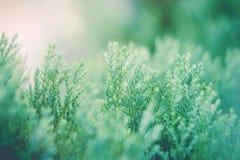 Το πράσινο φύλλο στα πράσινα φυτά κήπων κλείνει επάνω για το επαν φρέσκο υπόβαθρο ή την ταπετσαρία τοπίων φύσης στοκ εικόνα με δικαίωμα ελεύθερης χρήσης