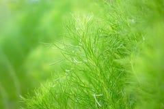Το πράσινο φύλλο στα πράσινα φυτά κήπων κλείνει επάνω για το επαν φρέσκο υπόβαθρο ή την ταπετσαρία τοπίων φύσης στοκ εικόνα