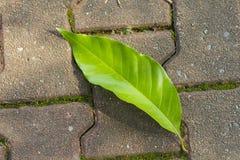 Το πράσινο φύλλο έχει την πτώση στη διάβαση πεζών Στοκ εικόνα με δικαίωμα ελεύθερης χρήσης