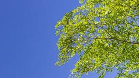 Το πράσινο φύλλο στο μπλε ουρανό Στοκ εικόνες με δικαίωμα ελεύθερης χρήσης
