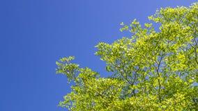 Το πράσινο φύλλο στο μπλε ουρανό Στοκ εικόνα με δικαίωμα ελεύθερης χρήσης