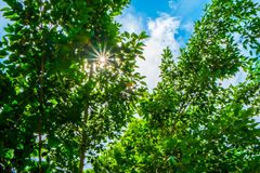Το πράσινο Στοκ Εικόνα