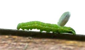 Το πράσινο Caterpillar φέρνει το φορτίο κουκουλιού σφηκών στοκ εικόνες