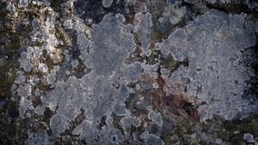 Το προηγούμενο πρόσωπο βράχου που καλύπτεται κινώντας στη λειχήνα φιλμ μικρού μήκους