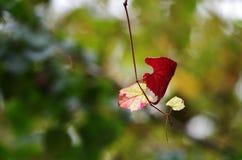 το προσεγγισμένο φθινόπω& στοκ εικόνες με δικαίωμα ελεύθερης χρήσης