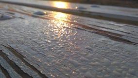 Το πρωί στο πάρκο Στοκ εικόνες με δικαίωμα ελεύθερης χρήσης