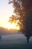 Το πρωί Στοκ εικόνες με δικαίωμα ελεύθερης χρήσης