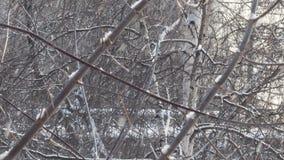 Το πρόσφατοι φθινόπωρο και ο χειμώνας έρχονται, τα χτυπήματα αέρα και αυτό χιόνια βαριά απόθεμα βίντεο