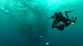 Το πρόσωπο που κολυμπά μεταξύ του κοπαδιού των ψαριών γρύλων μέσα στο Μπαλί, Ινδονησία απόθεμα βίντεο